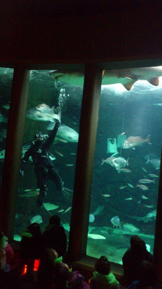 Os nenos das escolas de Mugardos e Pontedeume sairon de excursion ao acuario
